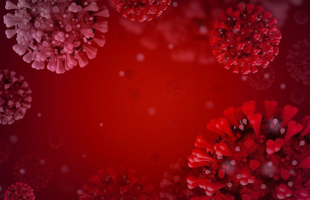 Ученые создали новые инструменты для изучения иммунной системы